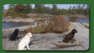 Three dogs on the rocks