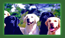 Group of Labs