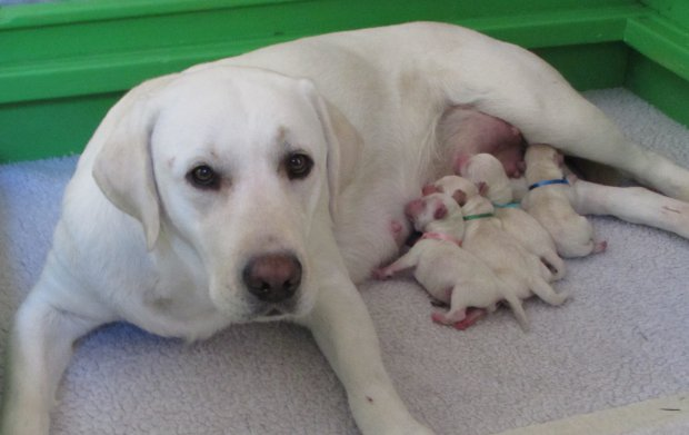 Fancy one hour after the pups were born.