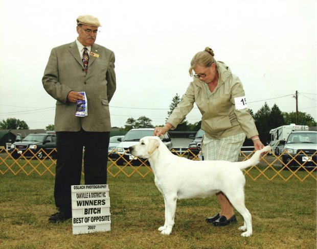 Nora takes Winners Bitch and Best of Opposites at the Oakville Show