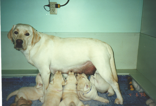 Summer and her last litter 2002