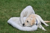 A young Charlie with his blankie.