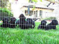 Scouts puppies outside