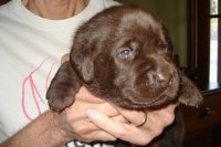 Green ribbon chocolate male weighs 4 lbs. 2 ozs. today